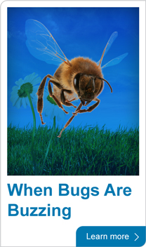 When bugs are buzzing