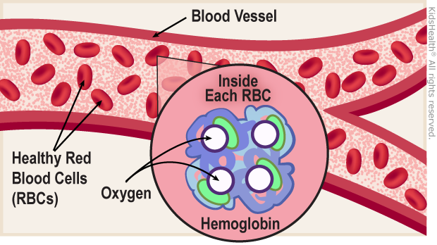 hemoglobin illustration