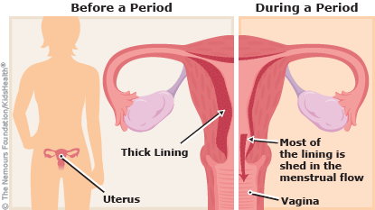 menstruation illustration